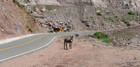 Donkeys everywhere